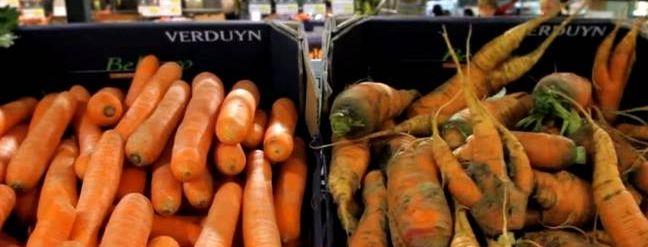 wortels, gewoon en 'lelijk'