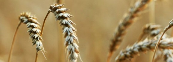 Voedselbos maken. Les 1